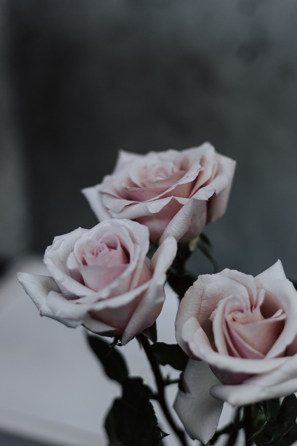 Pink-Roses